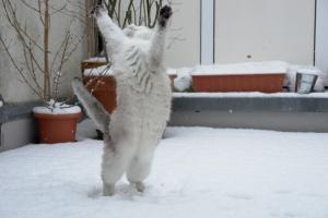 cat_dancing_in_the_snow-tscherno1